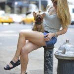 足を組む女性と犬