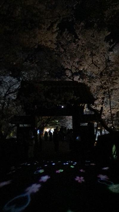 伊那 高遠の桜 夜桜