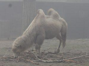 ポーランド クラクフ 動物園