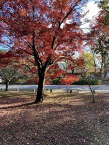 京都 京都御所 紅葉