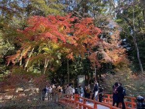 京都 伏見稲荷 紅葉
