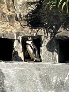 静岡 日本平動物園