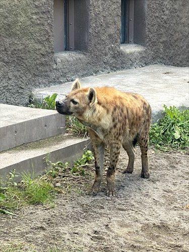 北海道 札幌 円山動物園