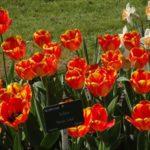 フランス パリ 植物園