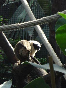 フランス パリ動物園
