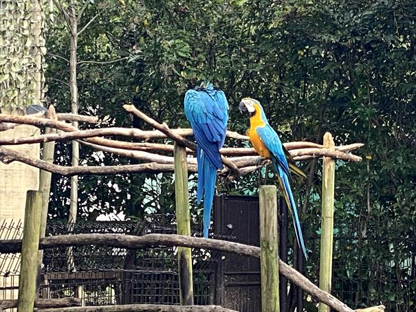 熊本 熊本市動植物園