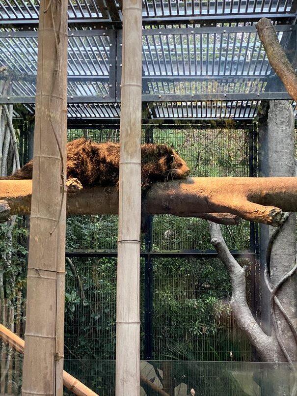 福岡 福岡市動物園